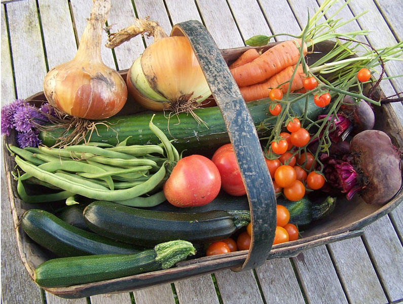 Image of freshly picked, home grown, organic vegetables at Creative Craft Retreats